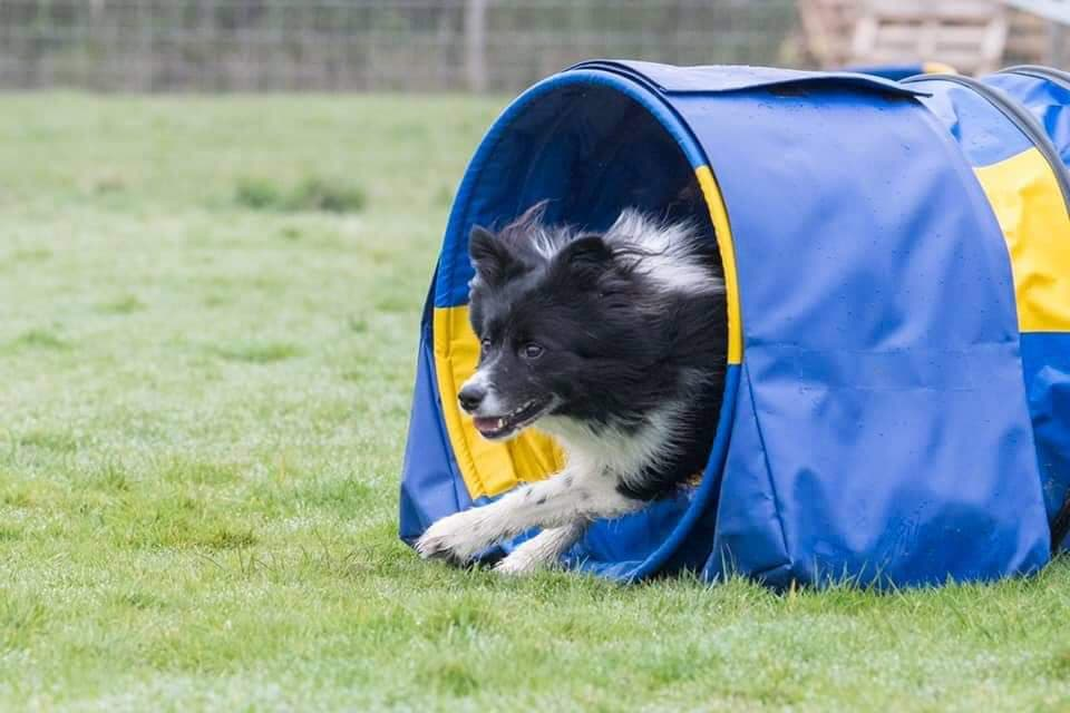 collie out of blue tunnel