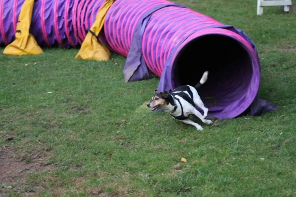 dog out of pink tunnel