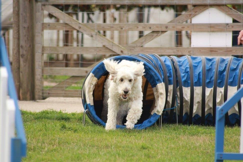white dog out of tunnel